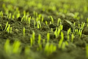 Auch das Pflanzen vorziehen beginnt mit der Saat