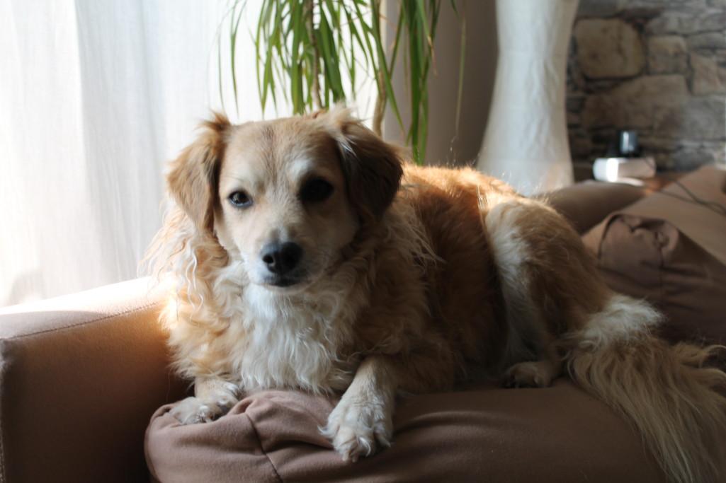 Hundebedarf bei Samen Wehrens